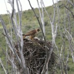 In the Nest